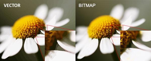 الفرق بين الصور النقطية والصور المتجهة